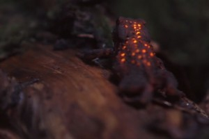 VIDEO-bioluminescent-forest_thumb