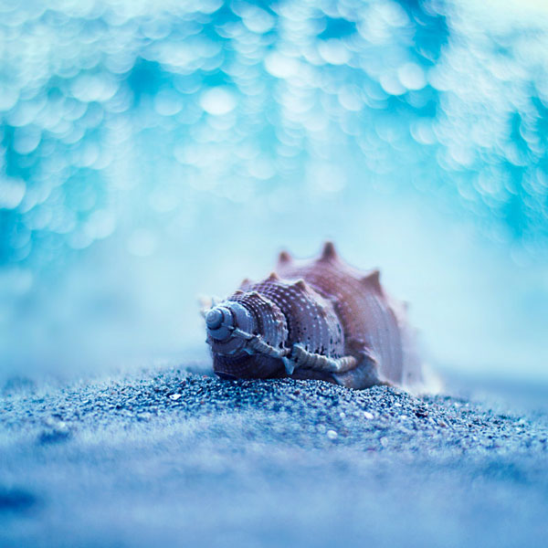 photo-Ashraful-Arefin_3