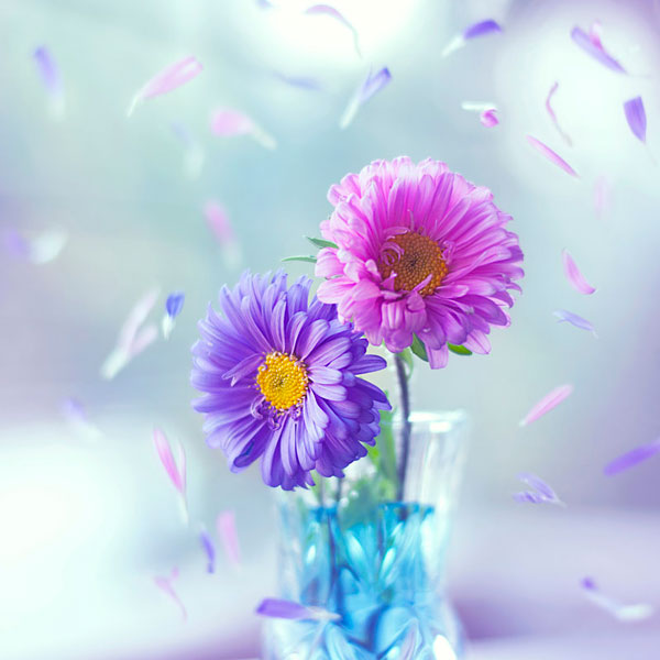 photo-Ashraful-Arefin_6